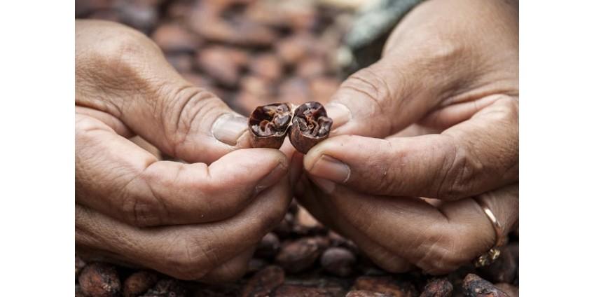 Çikolata Nasıl Yapılır 1. Bölüm